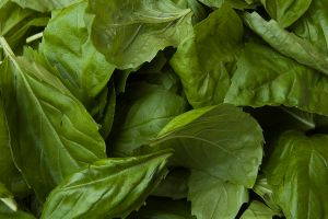 """Basil leaves"" by Paul Goyette. Licensed under CC BY-SA 2.0 via Wikimedia Commons"
